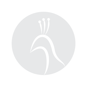 Workshop Pearl Nails PlastiLine: Creëer meer! Woensdagavond 31 Oktober 2018